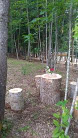Parco11